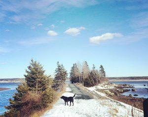 Halifax-Dogventures-2_crop