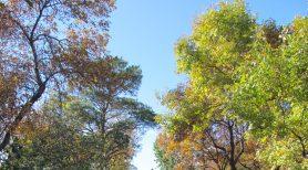 Wascana-Trail-by-Daryl-Mitchell