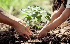Planter un arbre / Plant a Tree