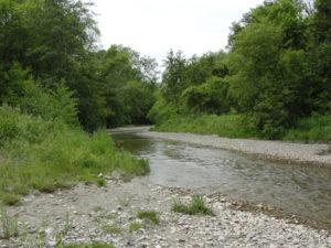 West Duffins Creek upstream