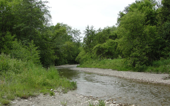 West Duffins Creek upstream
