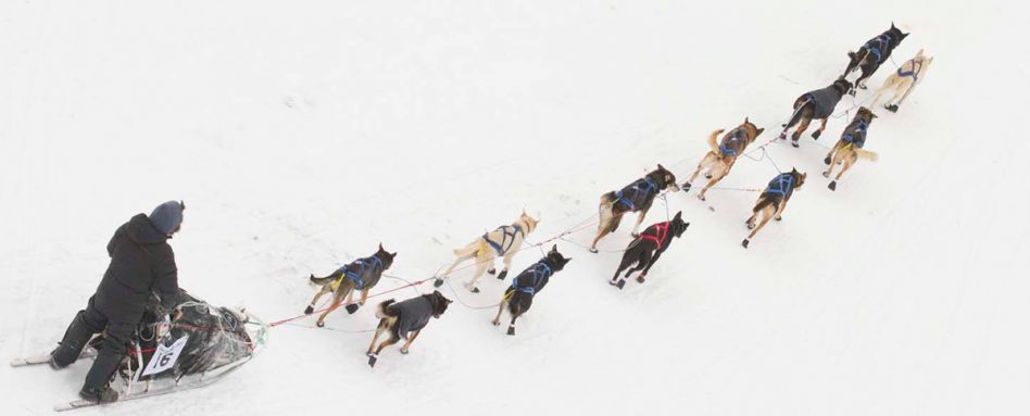 photo: Yukon Quest