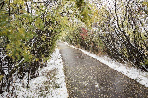 Red Deer Trail