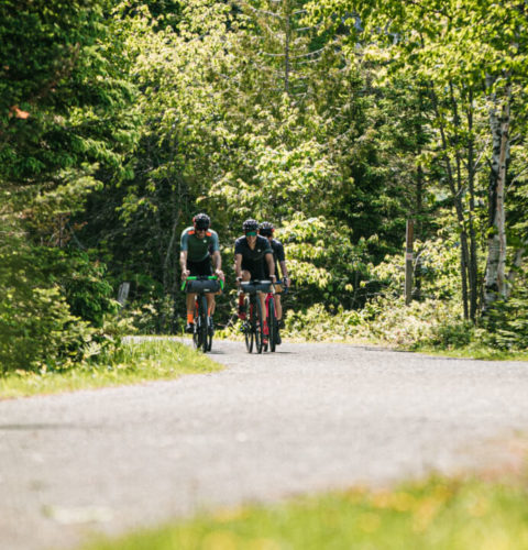 A group of three cycling down a windy forest path in the distance