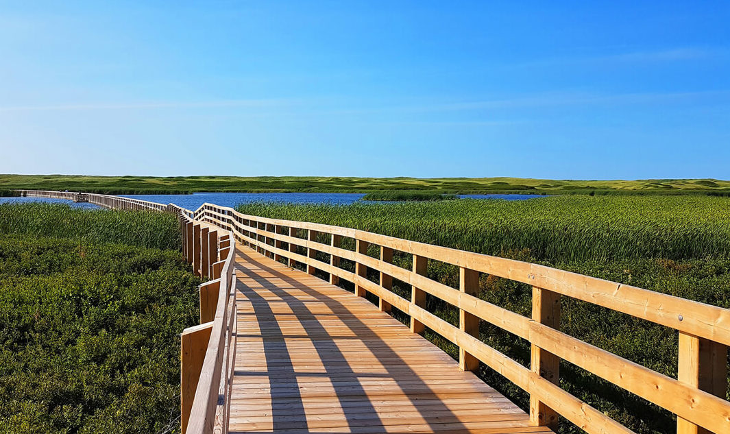 Wooden bridge elevated over greenery and water on beautiful day